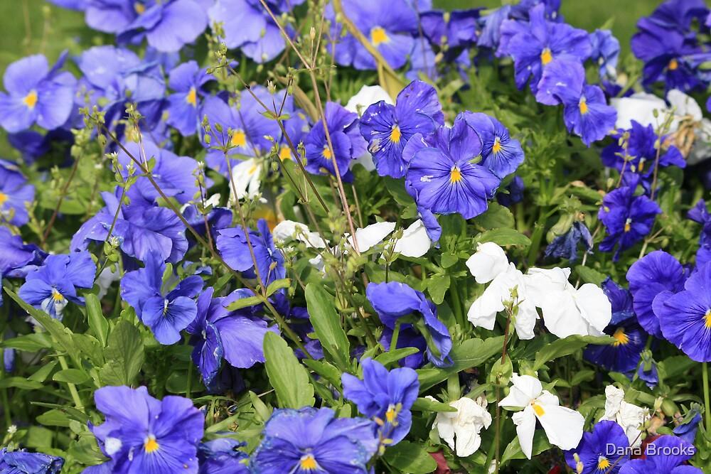 Flowers by Dana Brooks