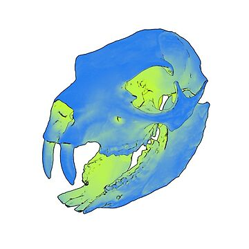 Rock hyrax skull by IVL3D