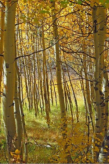Rocky Mountain Fall by tuckalucky