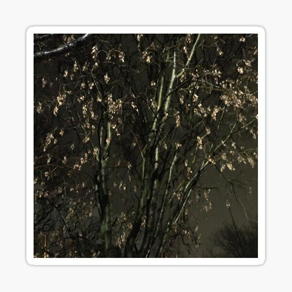 Iceland Tree at night Sticker