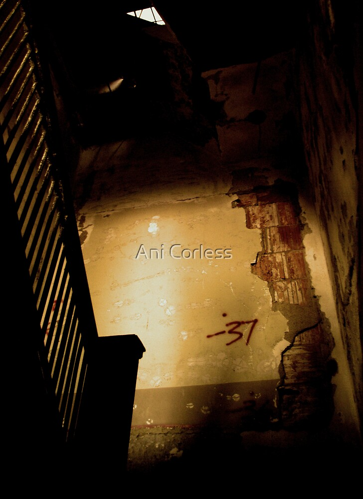 37 by Ani Corless
