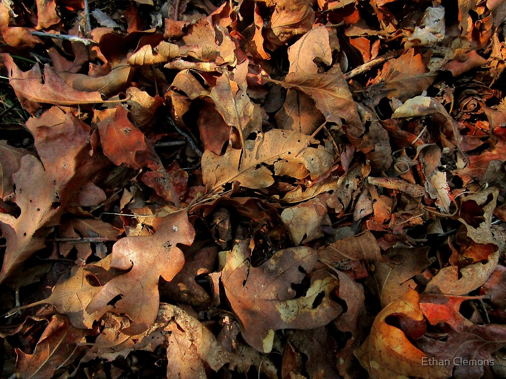 Fall Leaves by Ethan  Clemons
