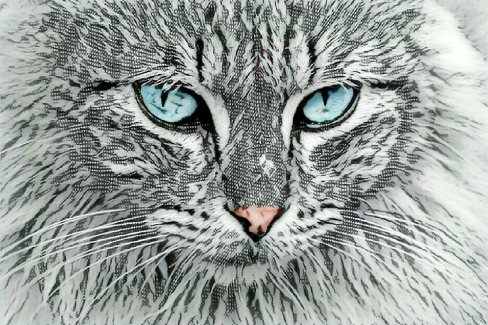 Shadow Cat by kalani21gs