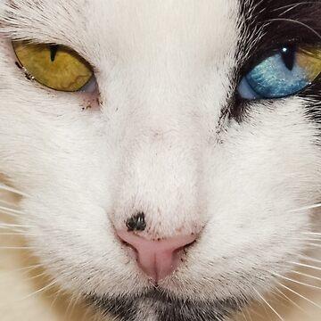 The cat eye by serbandeira