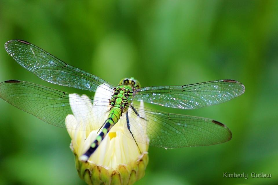 Dragonfly by Kimberly  Outlaw