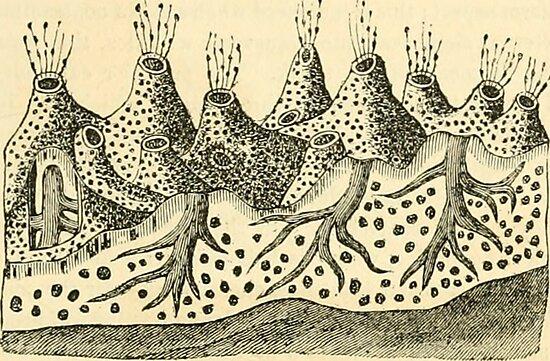 Sea Sponge Anatomy  by bluespecsstudio