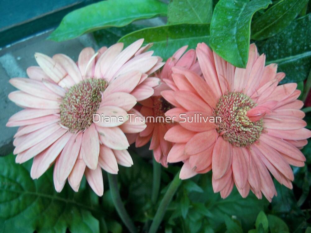 My Sisters Favorite Flower by Diane Trummer Sullivan
