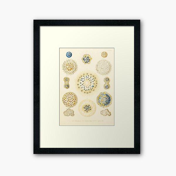 HD Radiolaria (1862) by Ernst Haeckels (1 of 5 designs) Framed Art Print