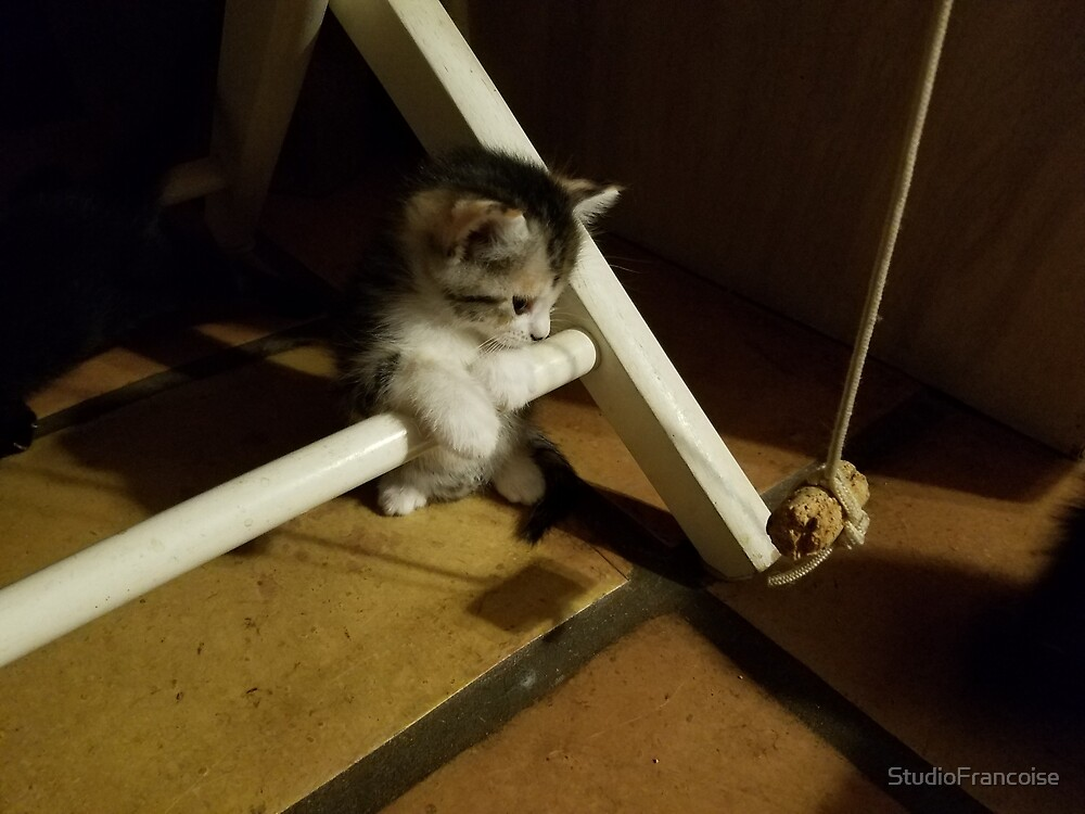 Kitten At Play by StudioFrancoise