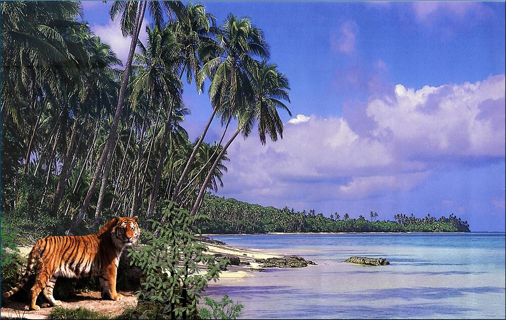 972-Tropical Cat by George W Banks