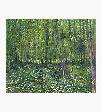 Vincent Van Gogh Trees and Undergrowth Photographic Print