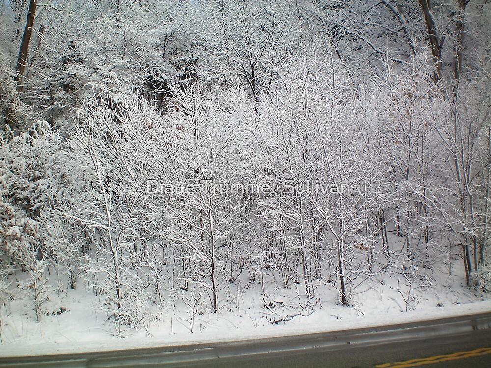 Minnesota Snow hwy 212 by Diane Trummer Sullivan