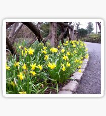 Central Park Daffodils Central Park New York City Sticker