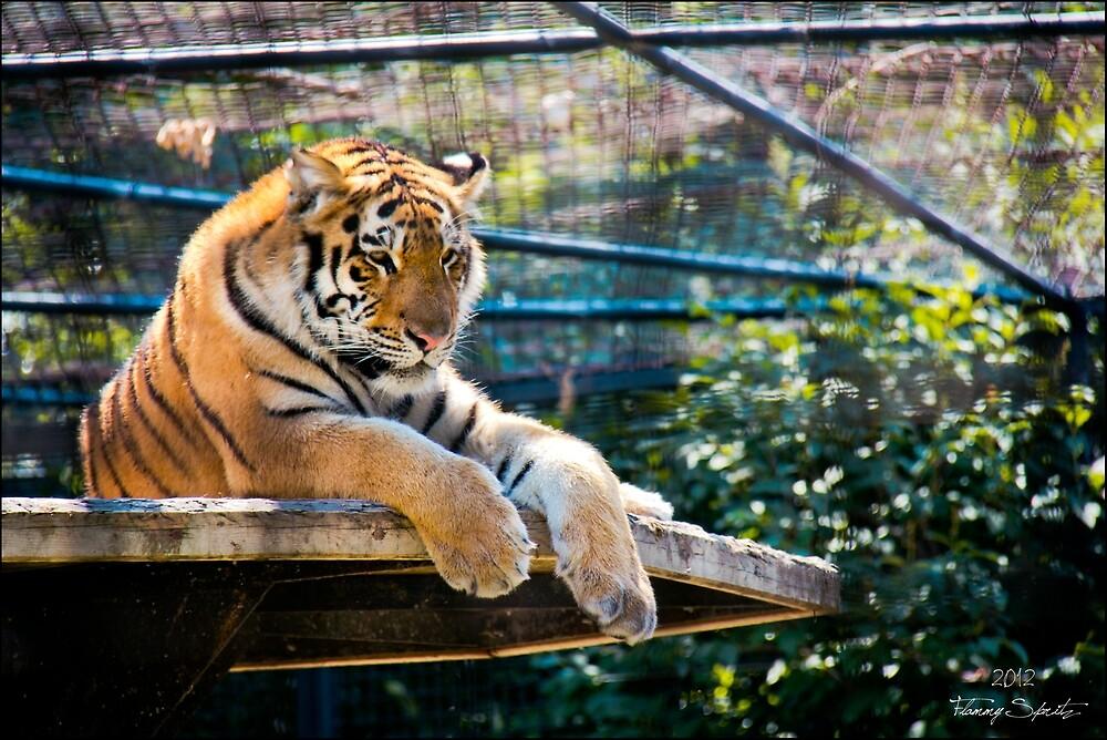 Tiger by SleepingMoonArt