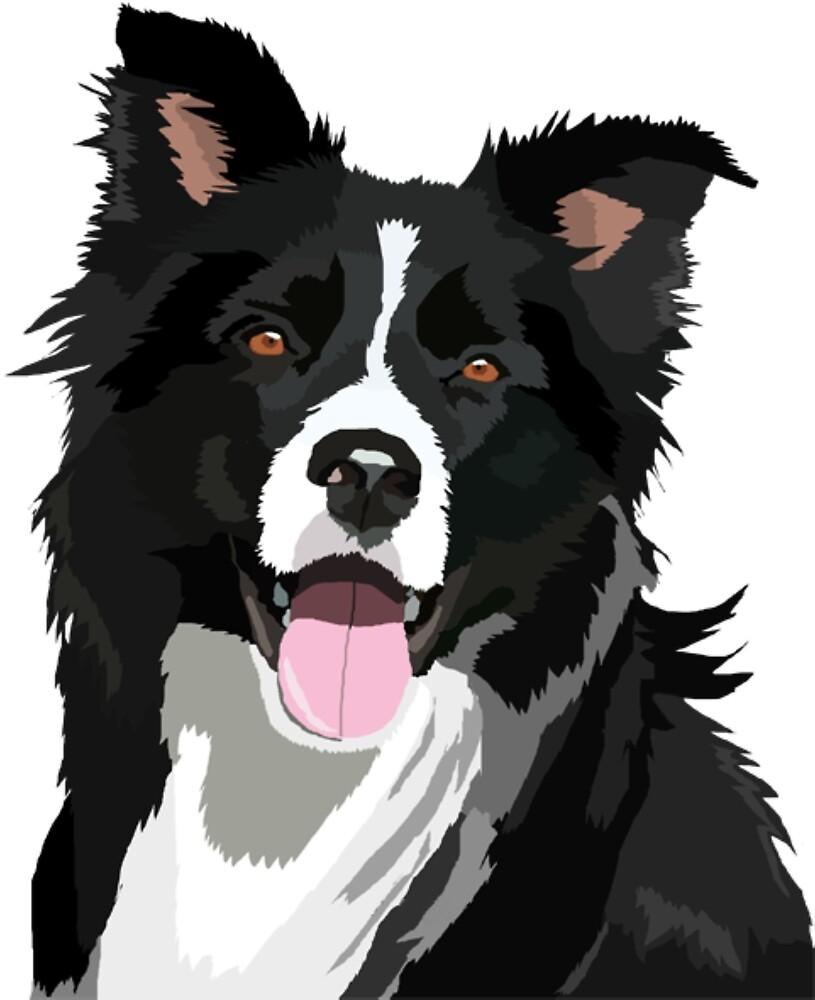Border Collie Dog #2 by kirollos