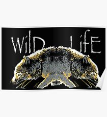 Timber Wolf Wild Life Poster