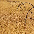 Field by Rebecca Cozart