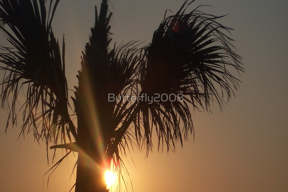 Palm Sunset by Butterfly2008