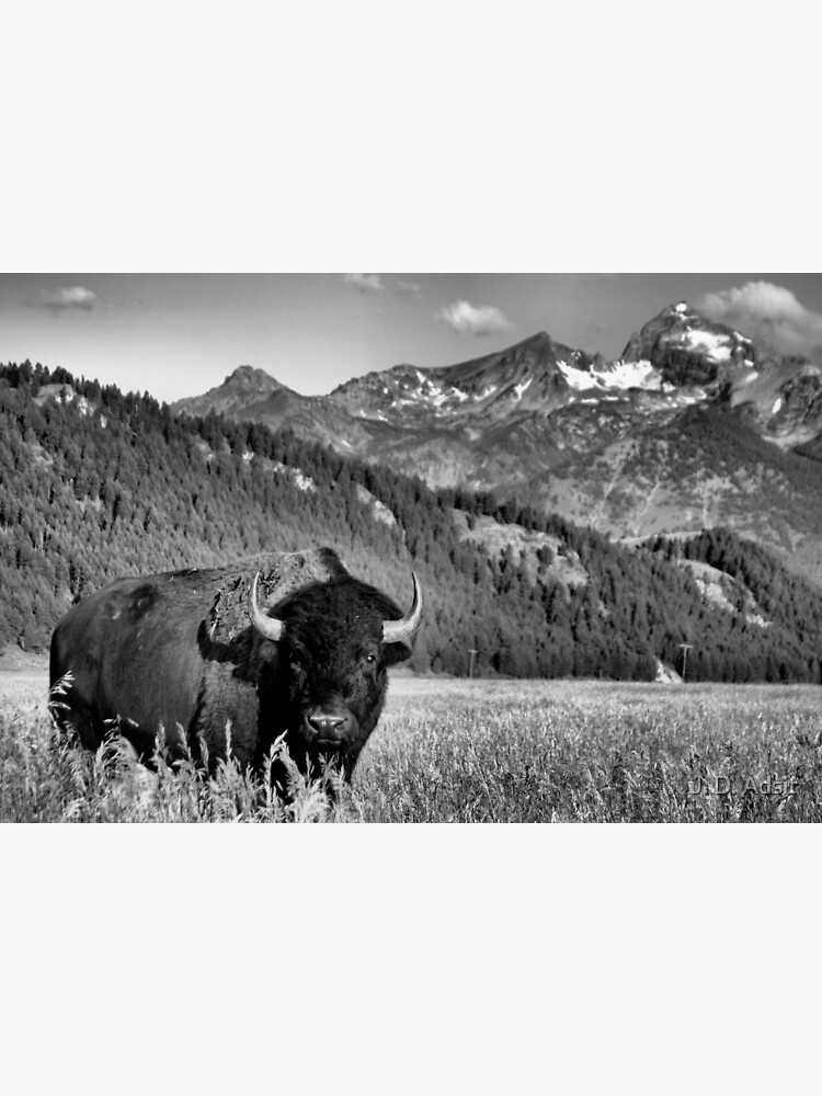 Welcome to Wyoming by adsitprojectpro