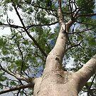Tree Trunk by gracelouise
