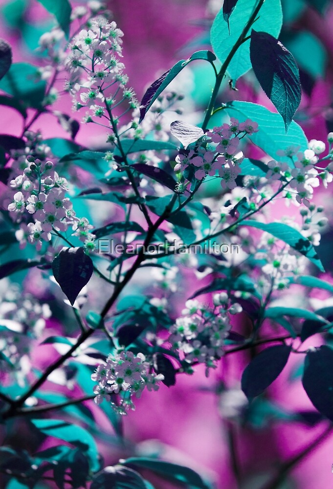 flowers in nature turquoise and purple by EleanorHamilton