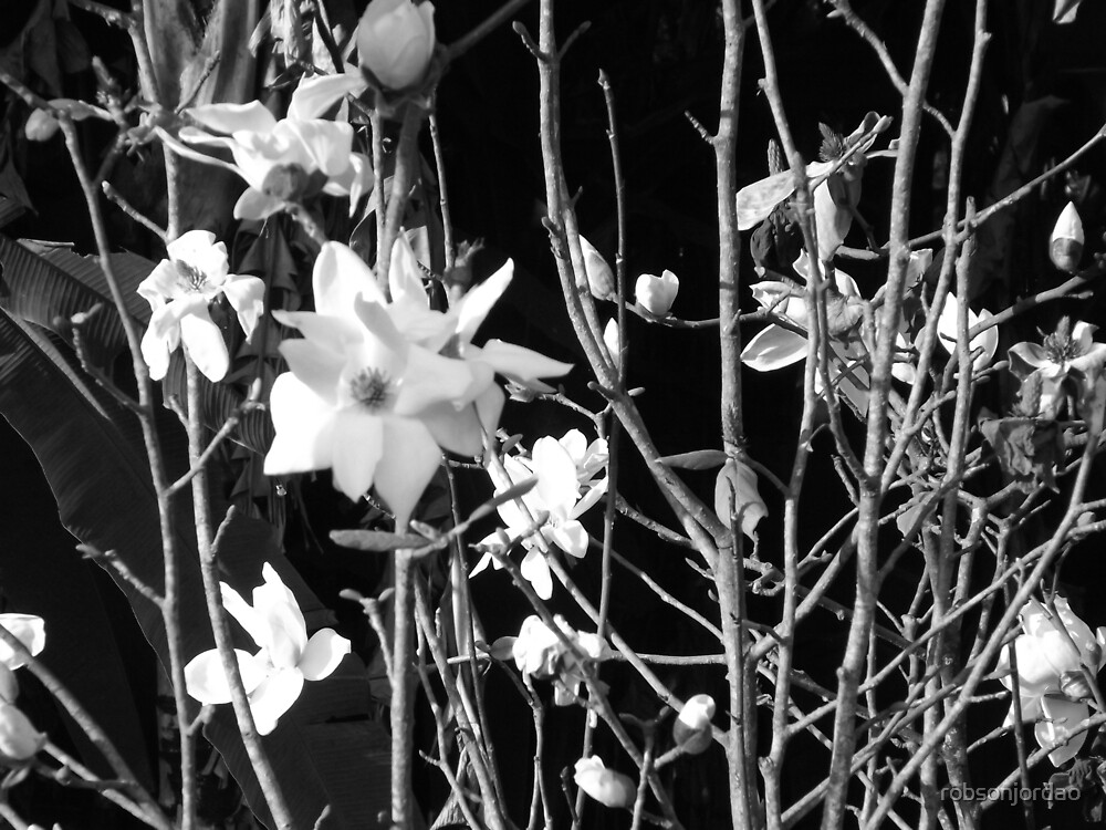 White flowers by robsonjordao