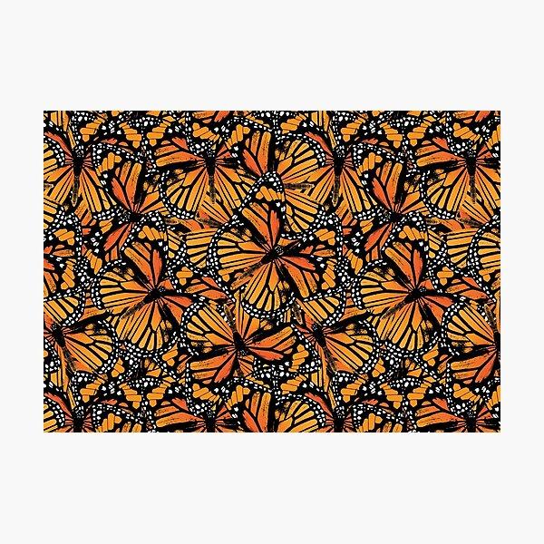 Monarch Butterflies | Vintage Butterflies | Butterfly Patterns |  Photographic Print