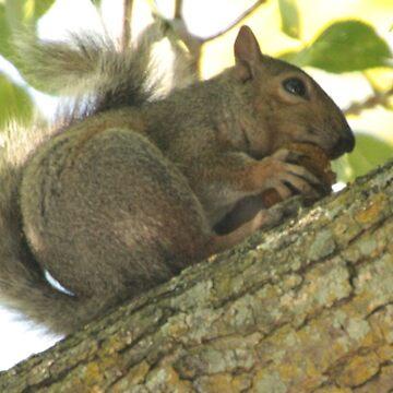 Squirrel in Ash Tree with Walnut by ThomasMurphy