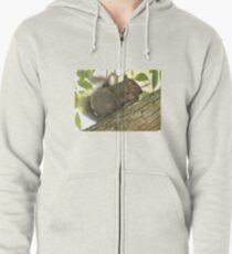 Squirrel in Ash Tree with Walnut Zipped Hoodie