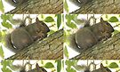 Squirrel in Ash Tree with Walnut by Thomas Murphy