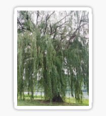 Willow. Sticker