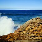 OceanSpray by Of Land & Ocean - Samantha Goode