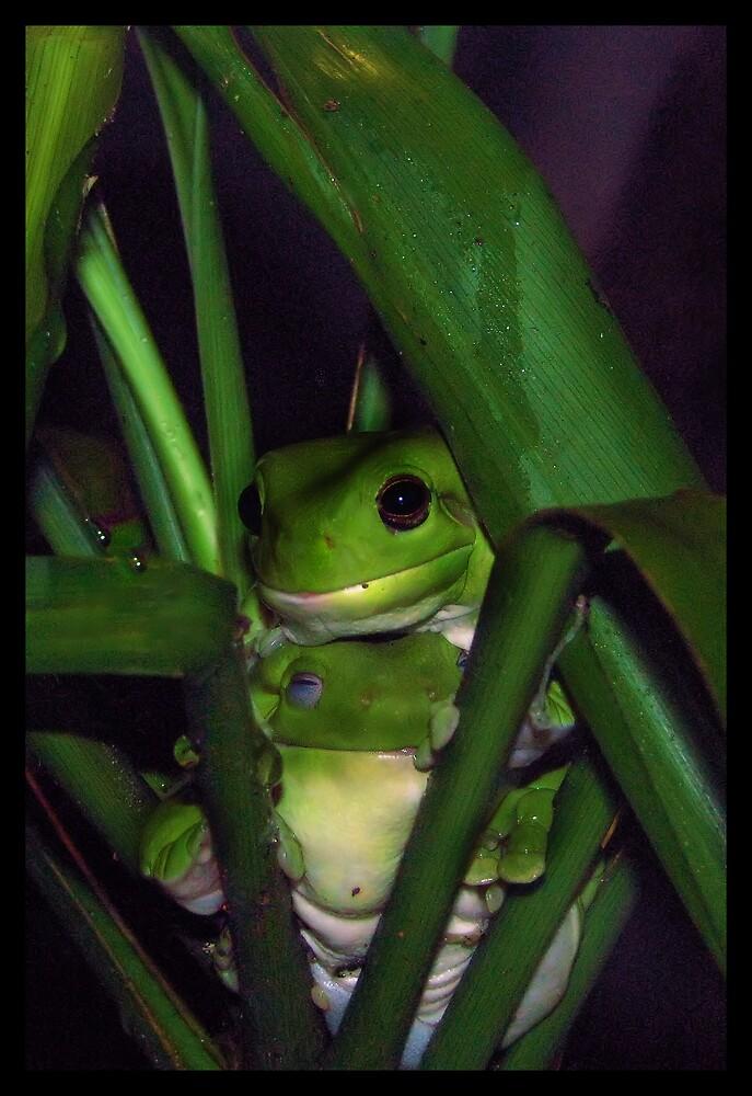 Froggy Friends by Rozzie