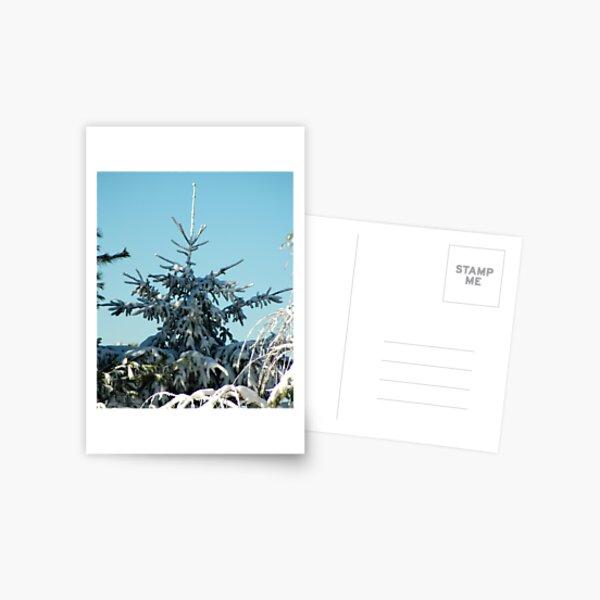 Winter Trees - 3 Postcard