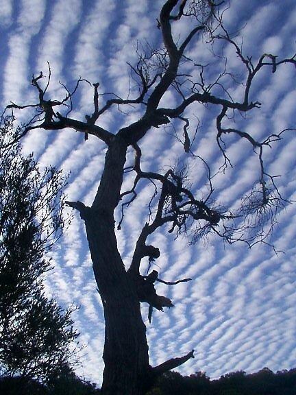 Zebra sky by wozza