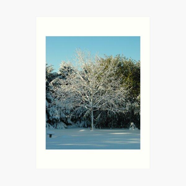 Winter Trees - 2 Art Print