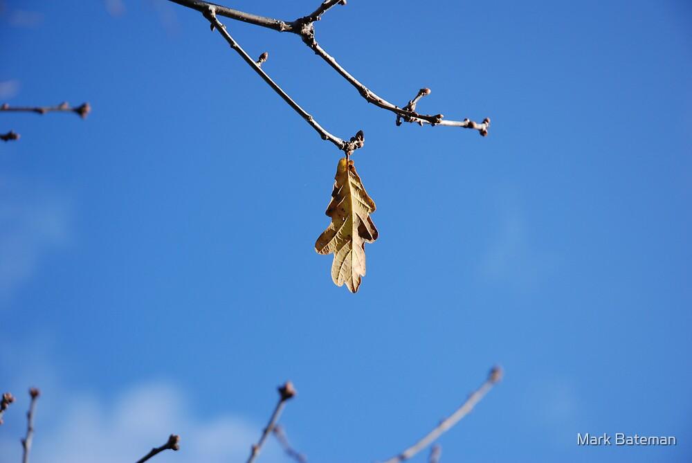 Hanging on.. by Mark Bateman