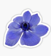 Blue Anemone Flower Sticker