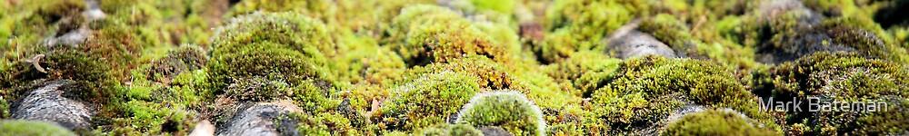 Green moss by Mark Bateman