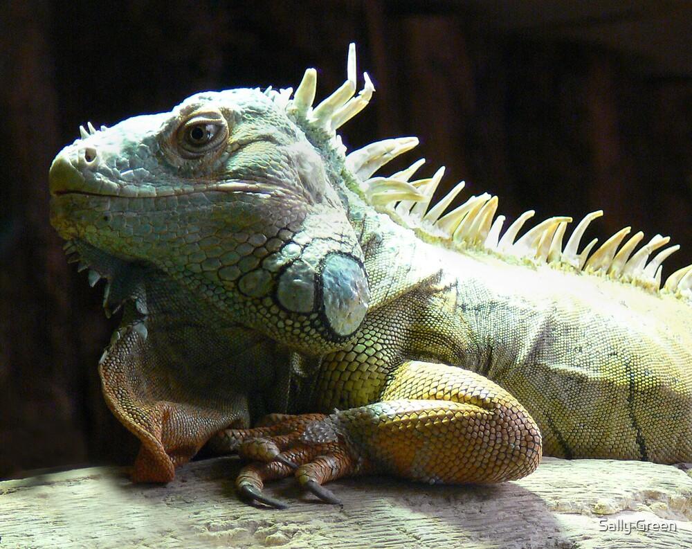 Iguana by Sally Green