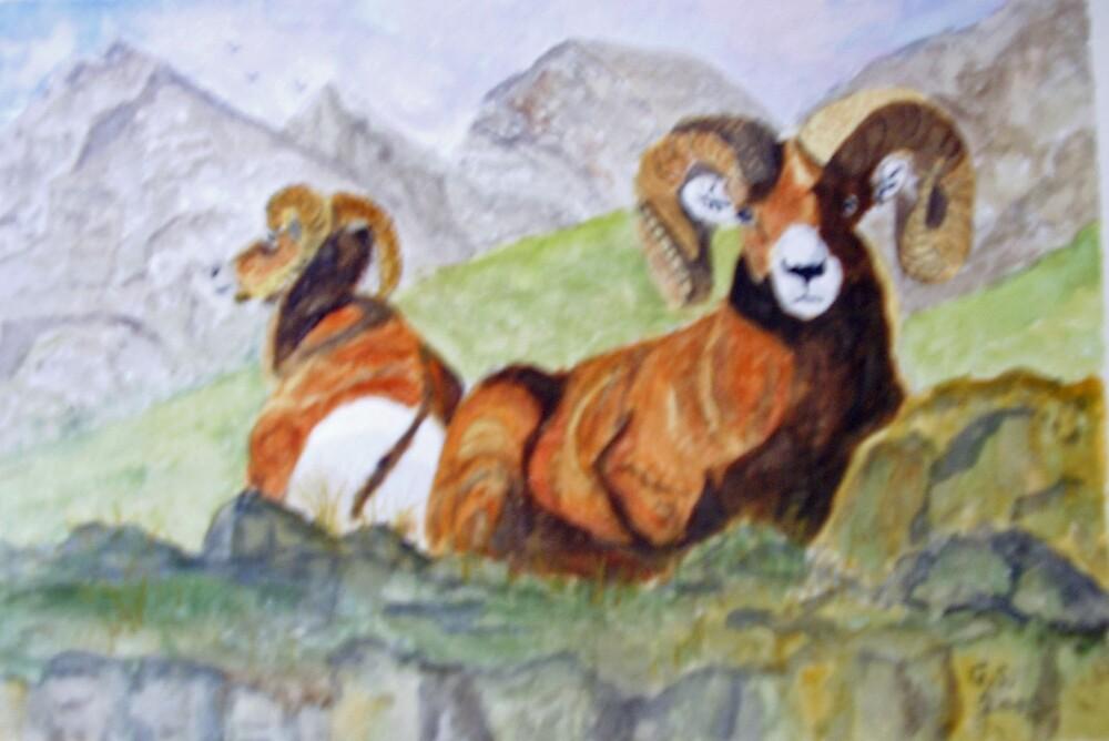 Bighorn Sheep by GEORGE SANDERSON
