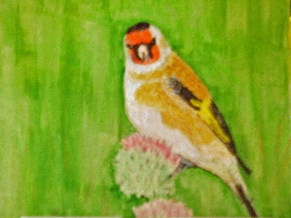 Goldfinch by GEORGE SANDERSON