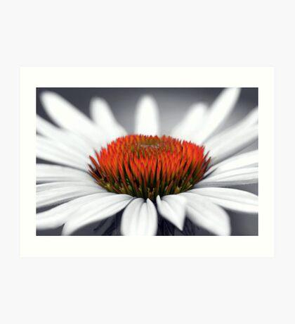 Echinacea Heart Art Print