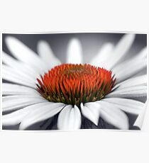 Echinacea Heart Poster