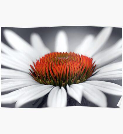 Echinacea Heart Poster