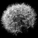 Soft ball 2 by Gili Orr