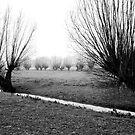 Pollard Willows in the Polder. by VanOostrum