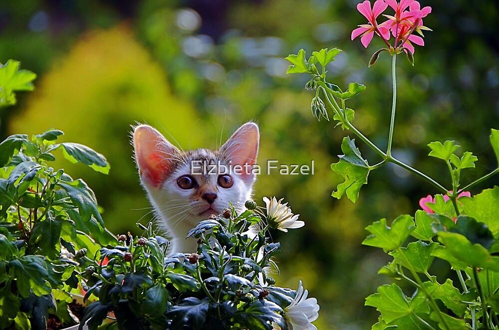 Funny Kitty by Elzbieta Fazel