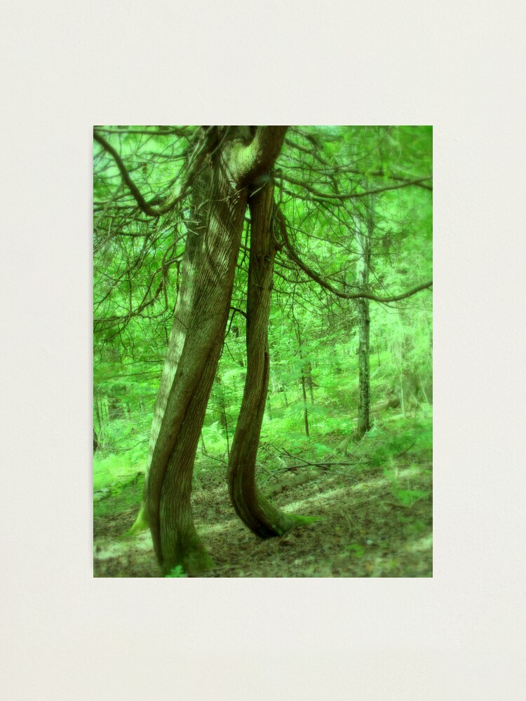 Alternate view of Music Amongst the Trees Photographic Print