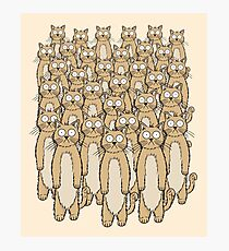 Funny Random Standing Cats Photographic Print